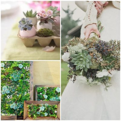 Going Green: How to Use Succulents in a Wedding