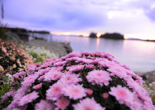 lexi-and-mike-main-migis-lodge-lake-sebago-flowers-wedding-_-glitterinc.com