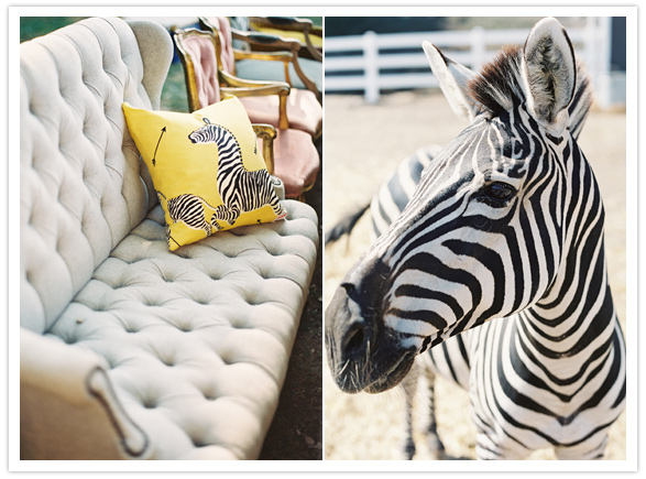 safari-inspired-wedding-ideas-zebra-pillow-ranch