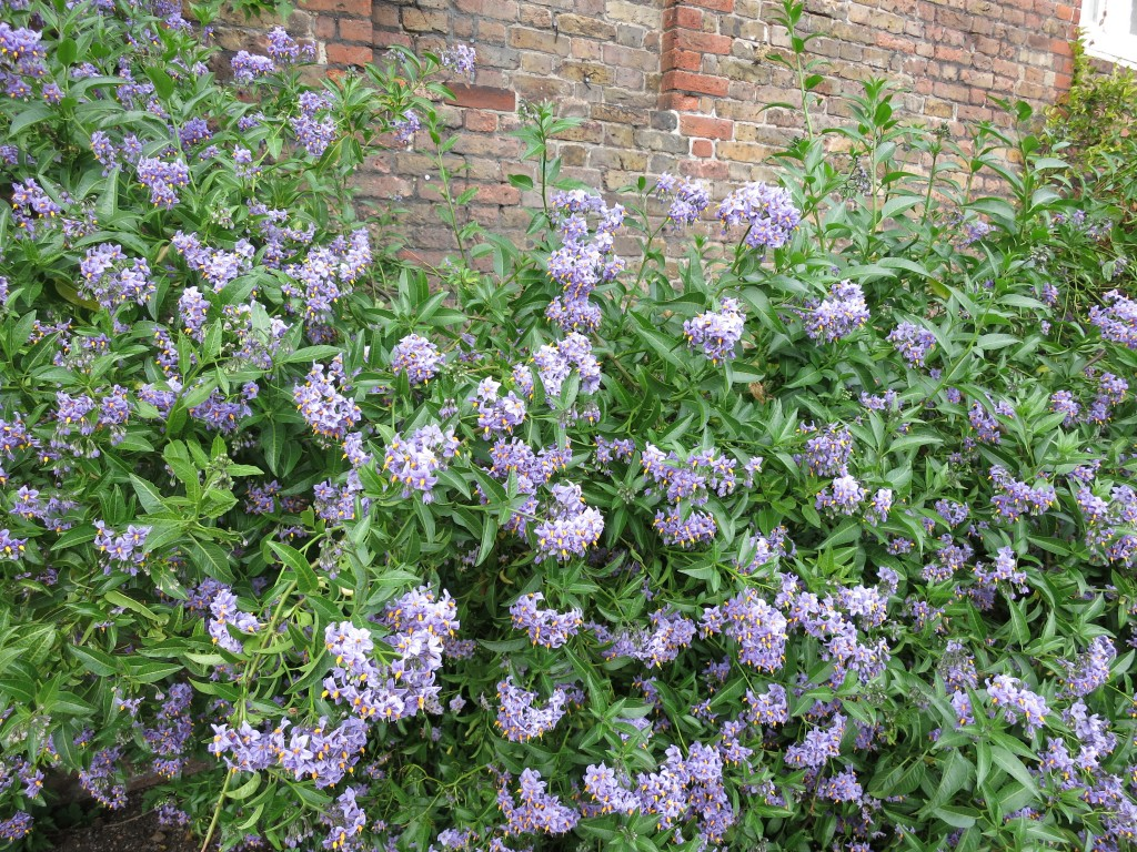 London Rimmel Vacation Hampton Court Palace purple flowers