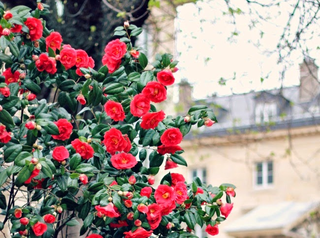flowers in paris.jpg