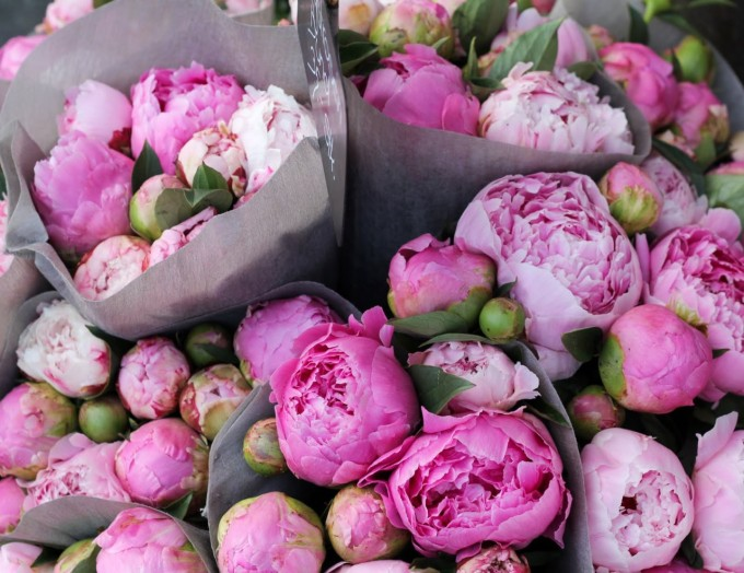 pink peonies market