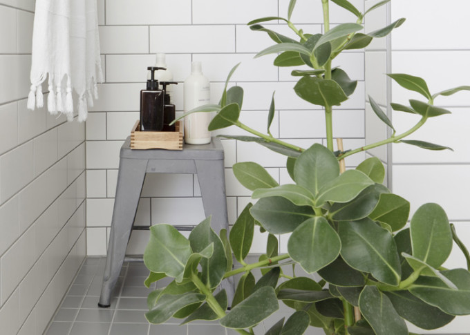 Est-Magazine-bathroom-plant-Studio-Oink-Select