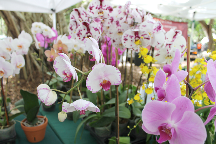 farmers-market-orchids-close-up---glitterinc.com