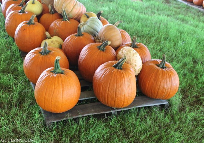 Pumpkin-Patch---Fall---glitterinc.com