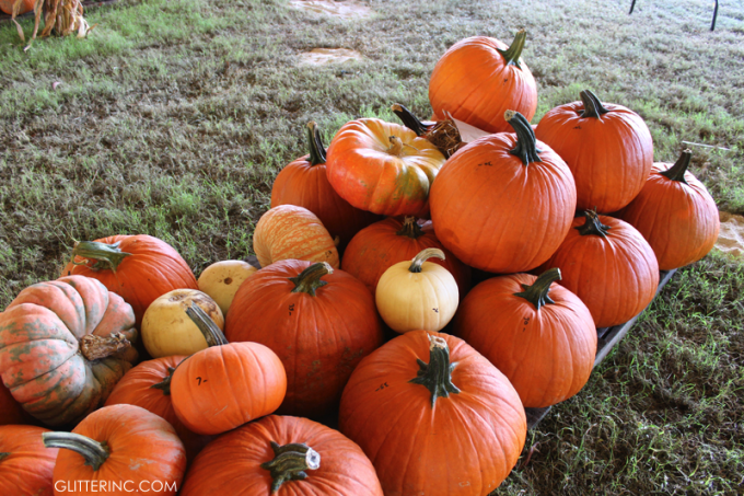 Pumpkin-Patch---glitterinc.com