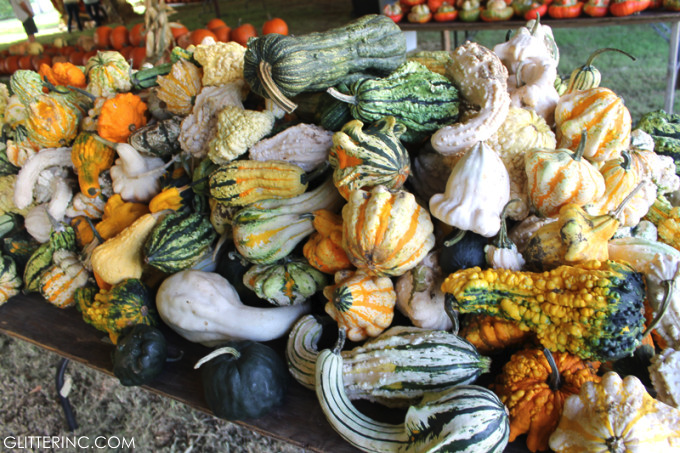 Pumpkin-Patch-gourds-glitterinc.com_-680x453