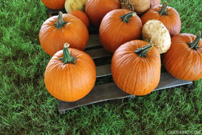 pumpkins---pumpkin-patch---glitterinc.com