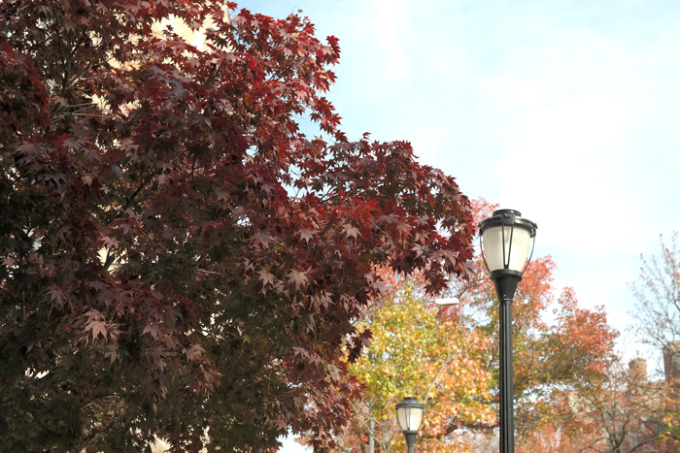 New-Haven-Fall-Leaves-Trees-Lamp-Post---glitterinc.com
