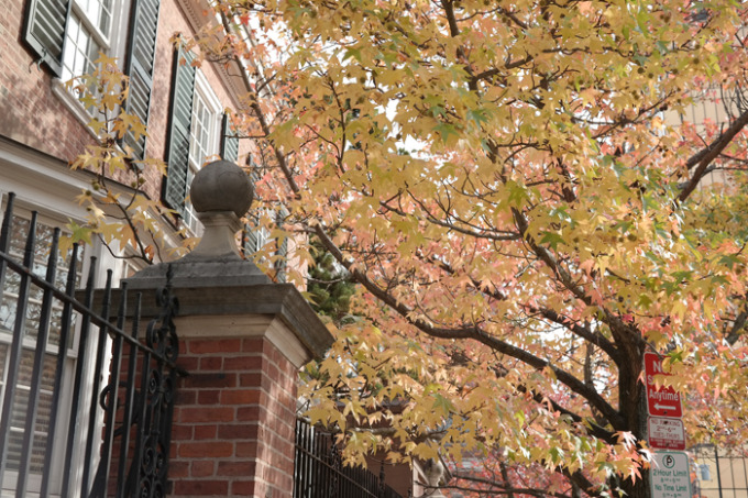 New-Haven-brick-building-Fall-trees-leaves---glitterinc.com