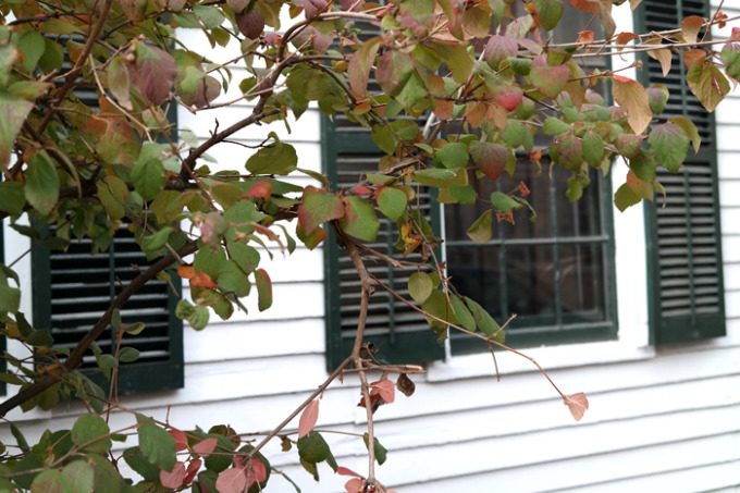 New-Haven---leaves-Fall-shutters---glitterinc.com