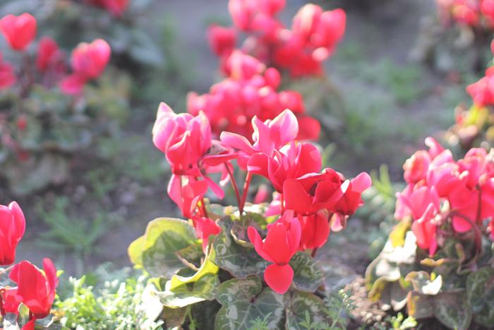 San-Diego-Balboa-Park-Flowers---glitterinc.com