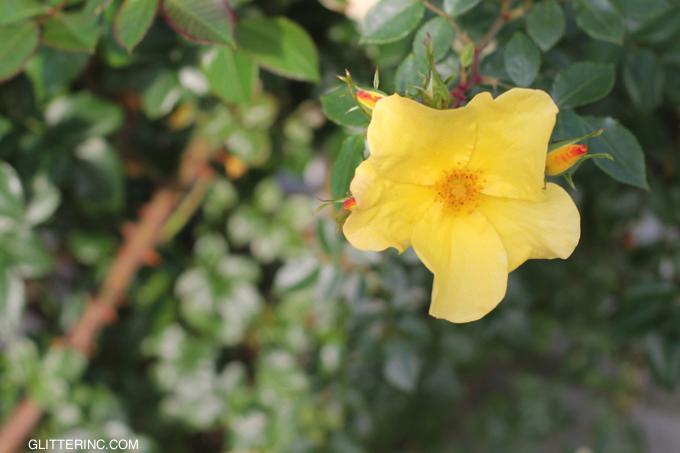 San-Diego-Flower-glitterinc.com_-680x453