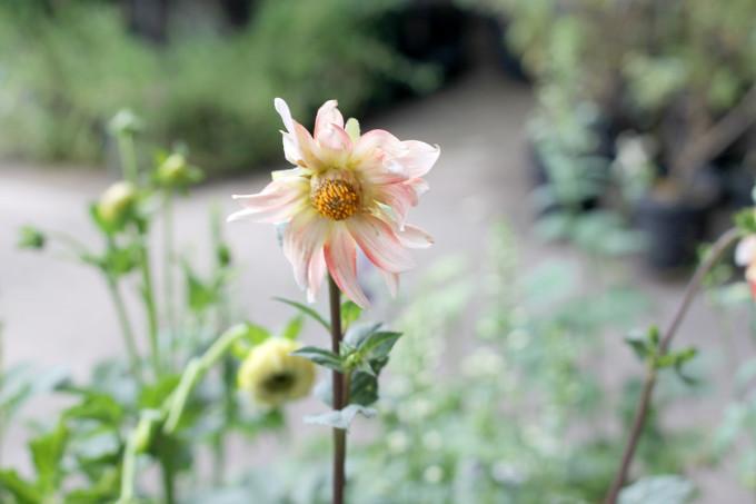 wildflower---nc-farmers-market---glitterinc.com