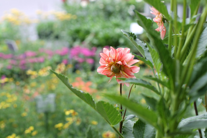 wildflowers---rows---nc-farmers-market---glitterinc.com