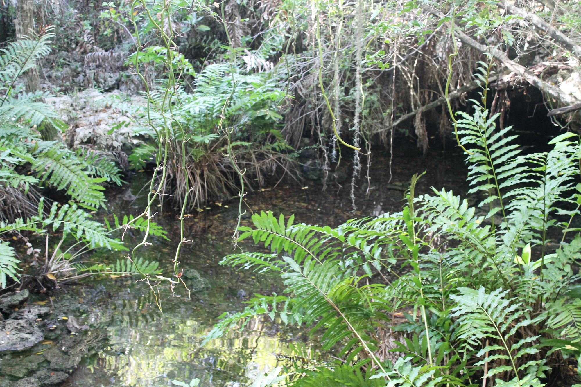 trees-lagoon-punta-cana