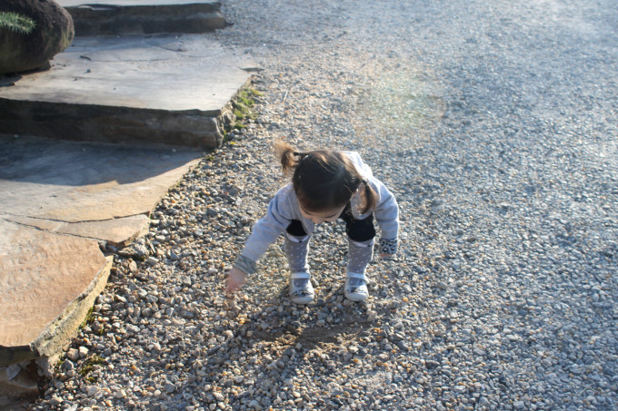 Scarlett Picking Rocks at Frogtown Winery and Vineyard