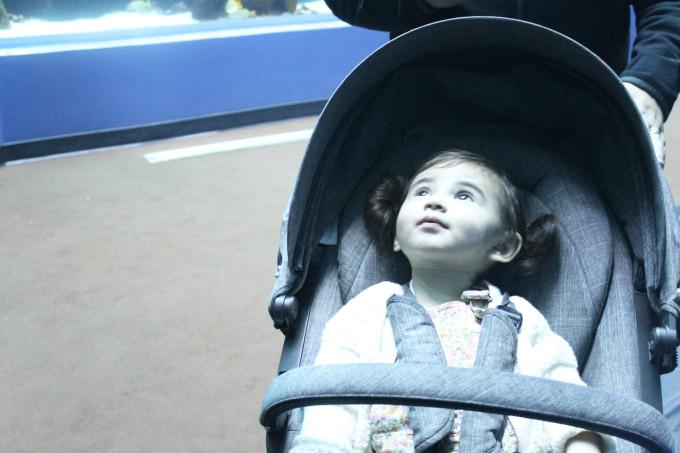 Scarlett at the Atlanta Georgia Aquarium