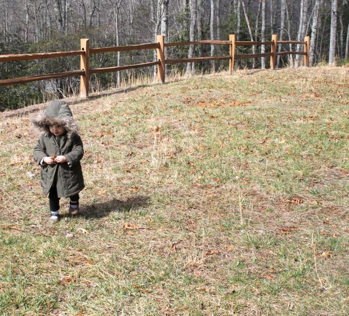 Scarlett Exploring in Burnsville North Carolina