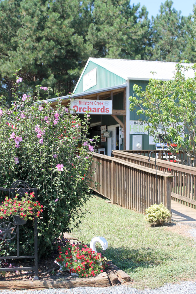 Guide to Millstone Creek Orchards in North Carolina - Taking Your Kids