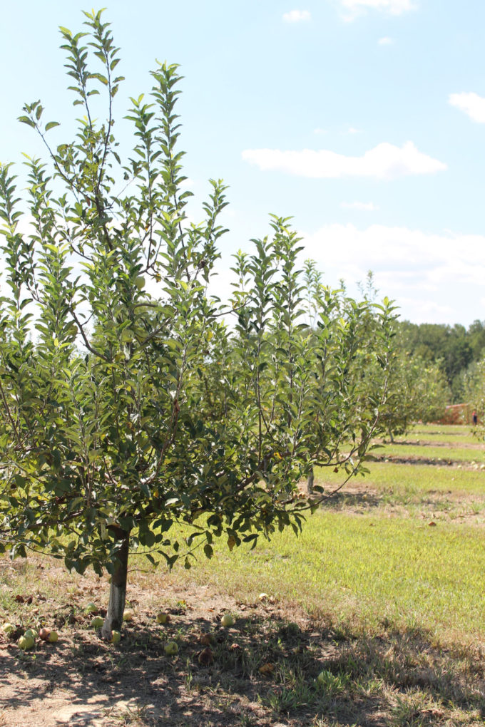 Guide to Millstone Creek Orchards in North Carolina