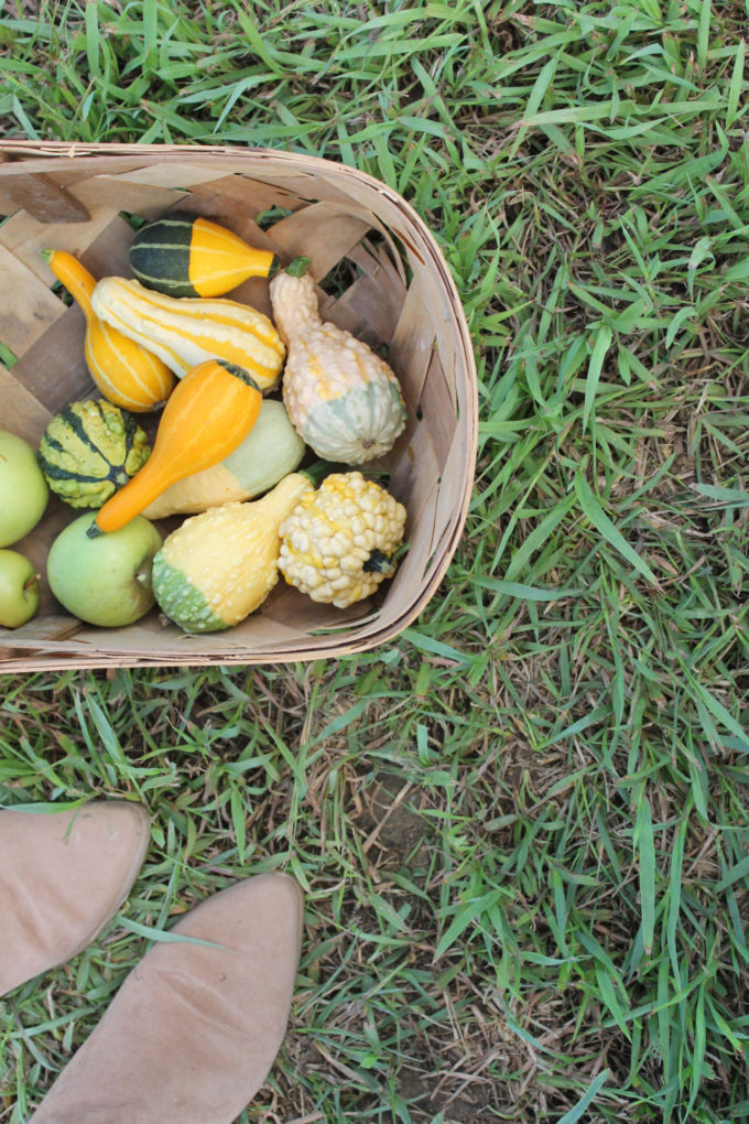 Guide to Millstone Creek Orchards in North Carolina - basket of gourds