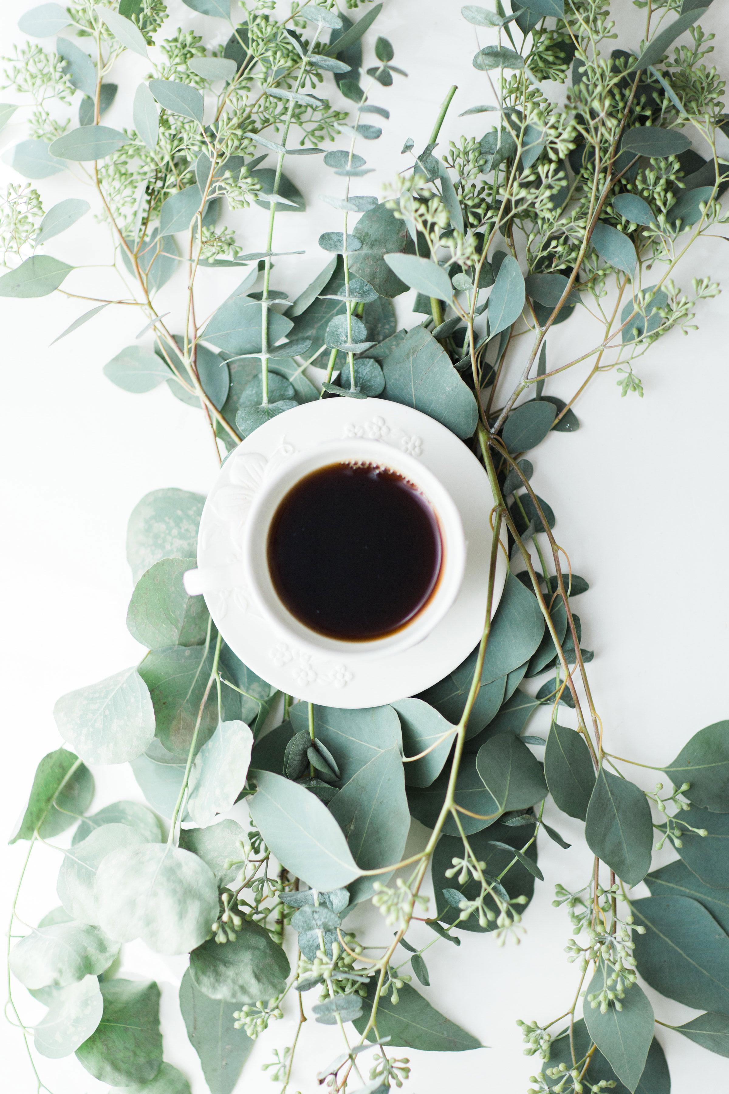 coffee-on-eucalyptus-3