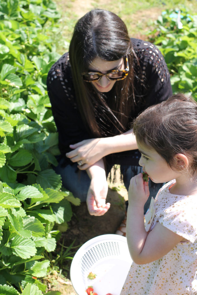 Exploring Durham: Strawberry Picking at Waller Family Farm in North Carolina by lifestyle blogger Lexi of Glitter, Inc.   glitterinc.com   @glitterinc