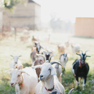 Fall Bucket List - Goat Farm in North Carolina