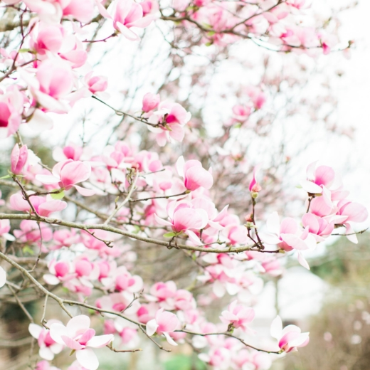 15 Things to Do This Spring; a.k.a., What's on My Spring Bucket List
