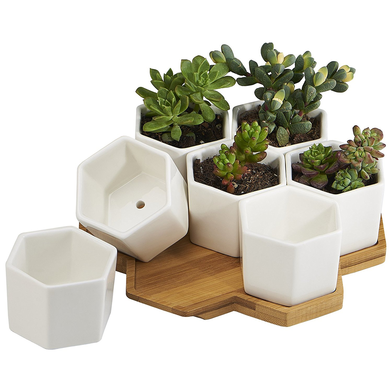 Indoor Succulent Planter Pots