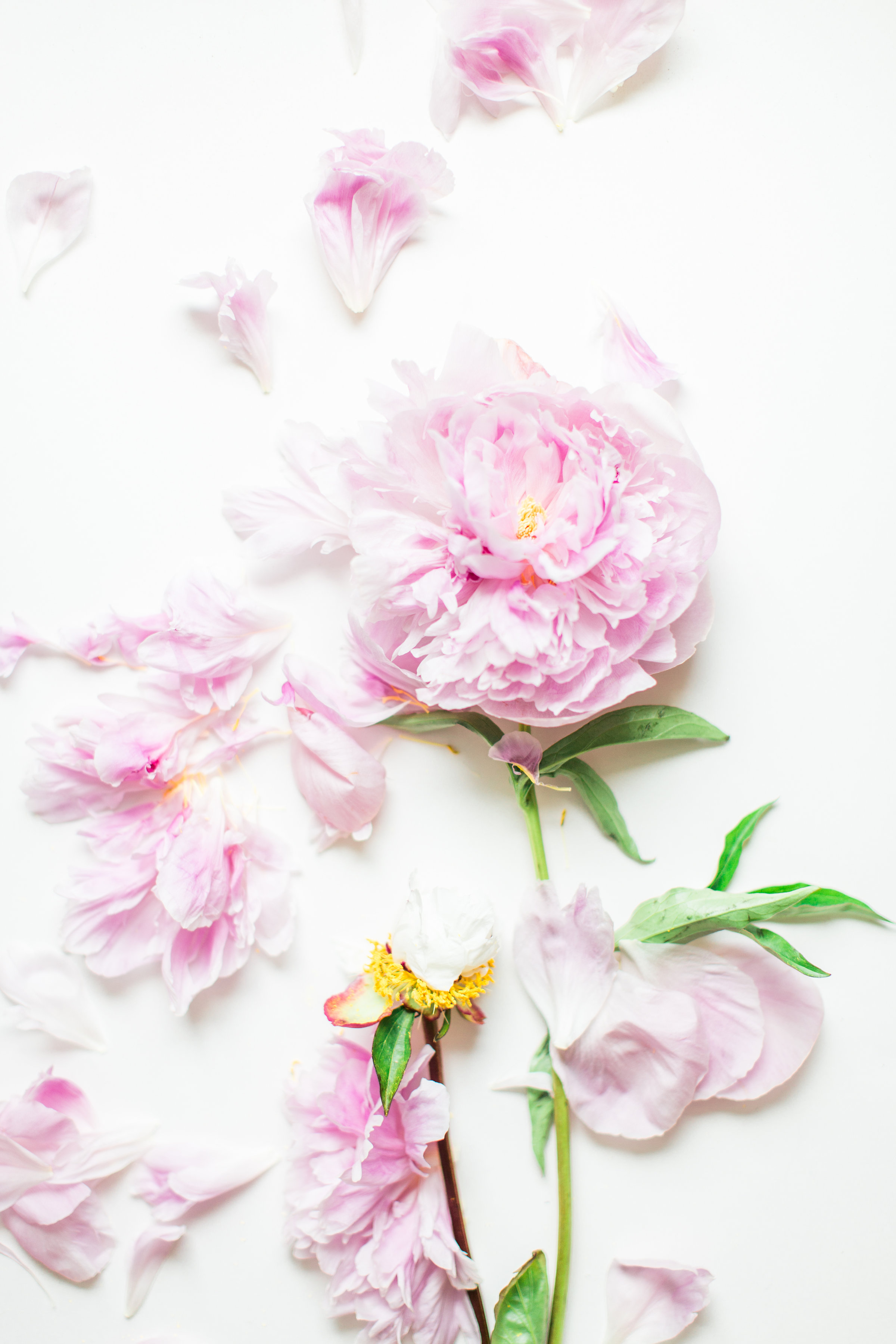 Lifestyle blogger Lexi of Glitter, Inc. shares a few little love notes to the things she loved most this week, plus weekend plans, and all of the peonies. Click through for the details. #peonies #flowers #leftoverflowers | glitterinc.com | @glitterinc