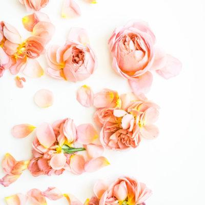 blush pink and peach roses - glitterinc.com - GlitterIncBlog-9741