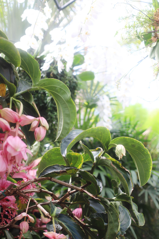 Conservatory & Gardens - Biltmore in Asheville