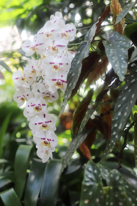 Conservatory & Gardens In Biltmore