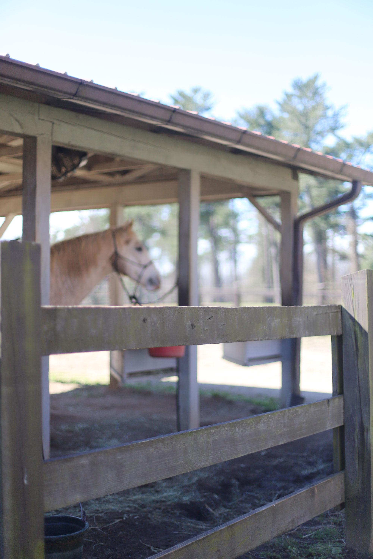 Horse at Biltmore