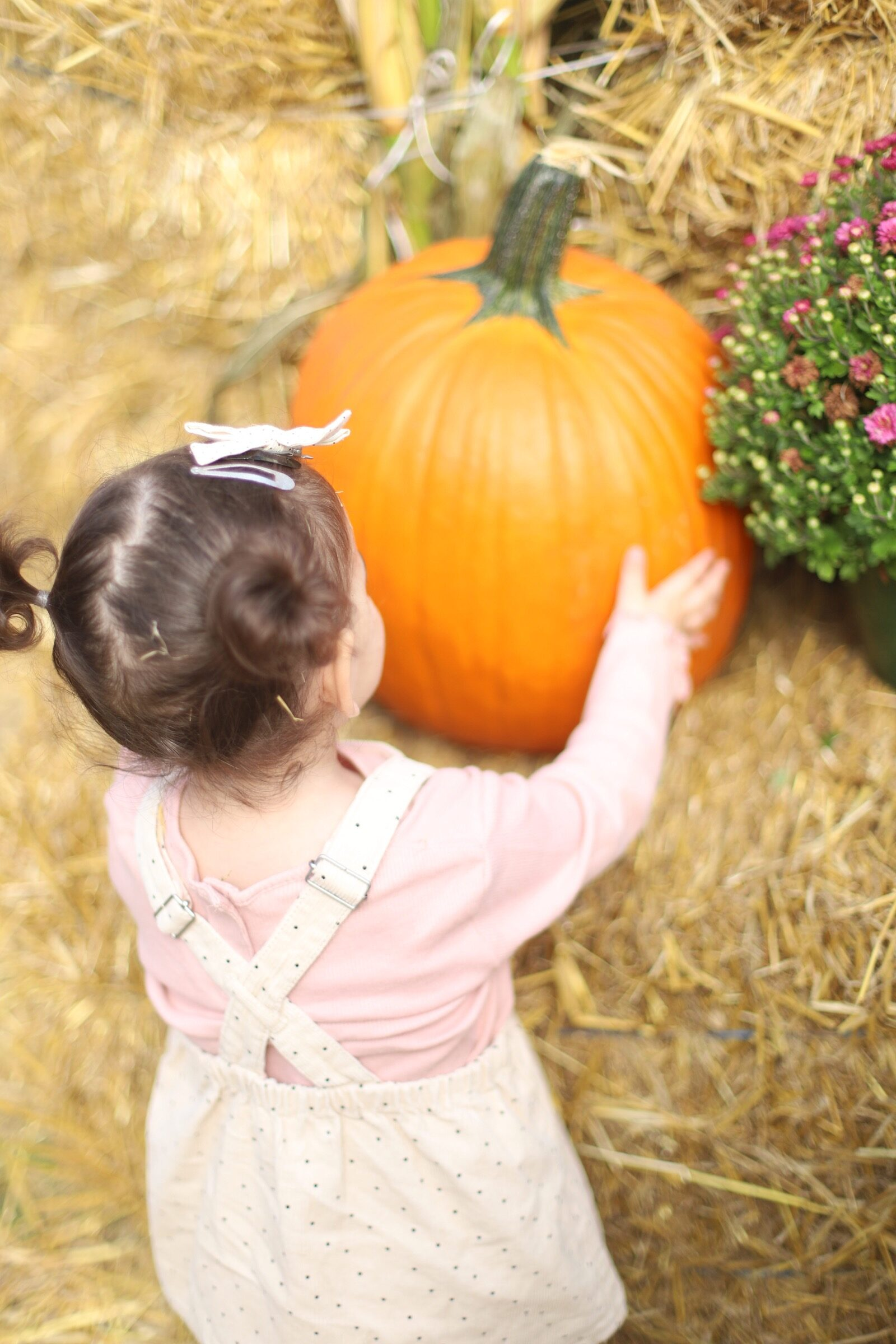 A little girl holding a big pumpkin during a trip to an apple orchard here in New England, complete with apple picking, barnyard animals, hayrides, and homemade donuts and pie. // Brooksby Farm in Peabody, Massachusetts // Fall Bucket List | glitterinc.com | @glitterinc