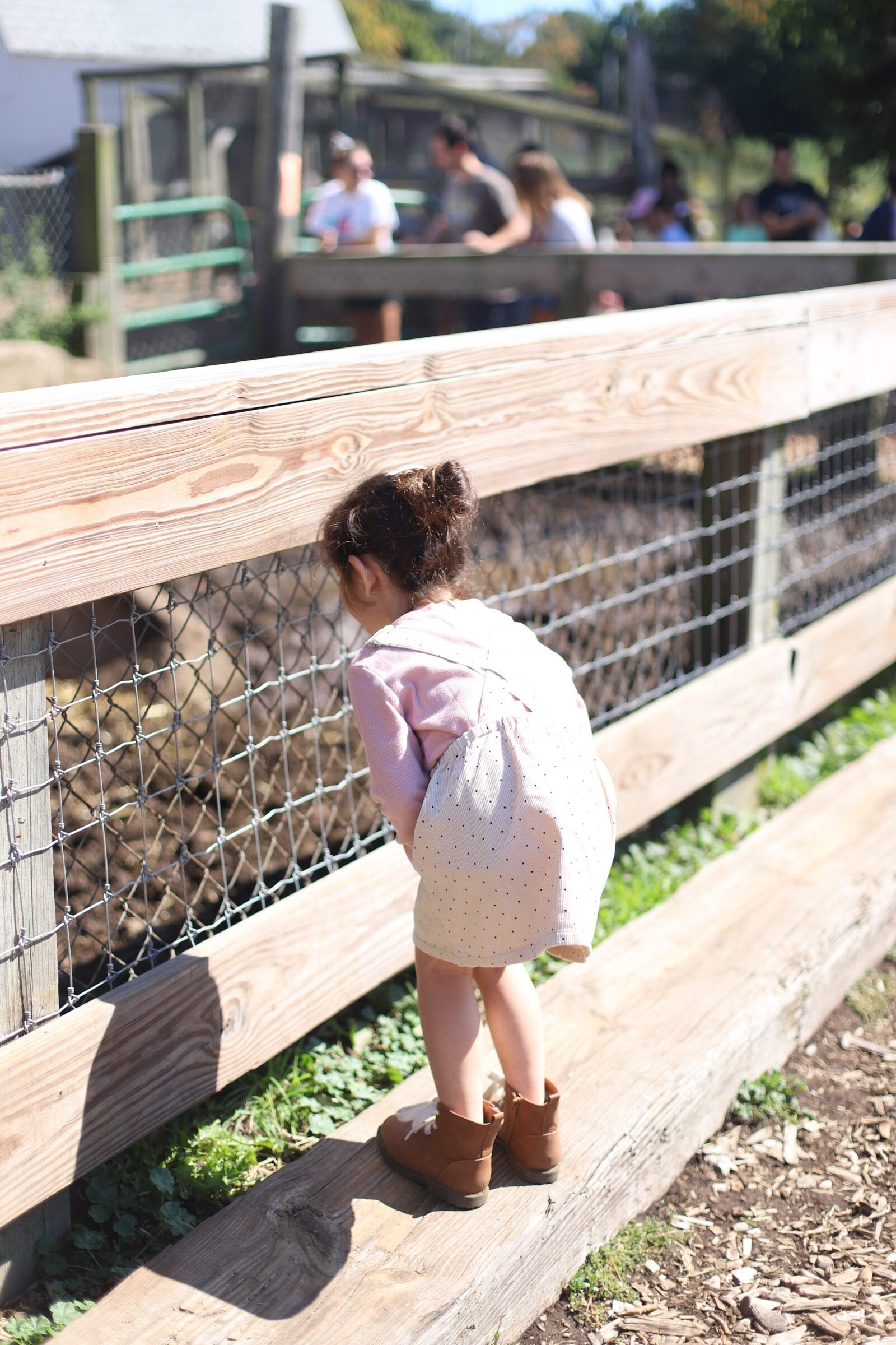 Little girl watching animals at Brooksby Farm in Peabody, Massachusetts // Fall Bucket List | glitterinc.com | @glitterinc