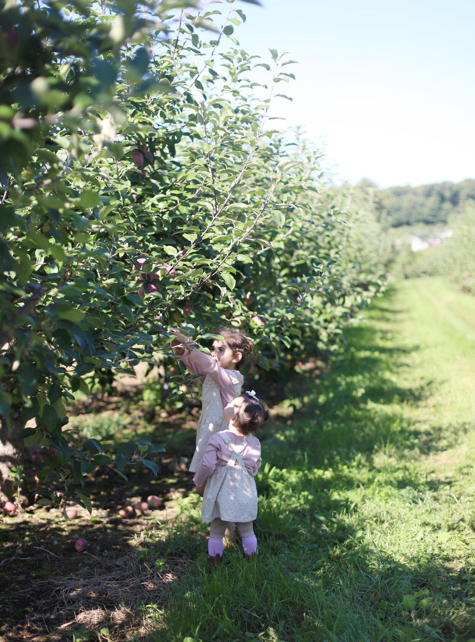 Two children enjoying apple pickingat Brooksby Farm in Peabody, Massachusetts // Fall Bucket List | glitterinc.com | @glitterinc