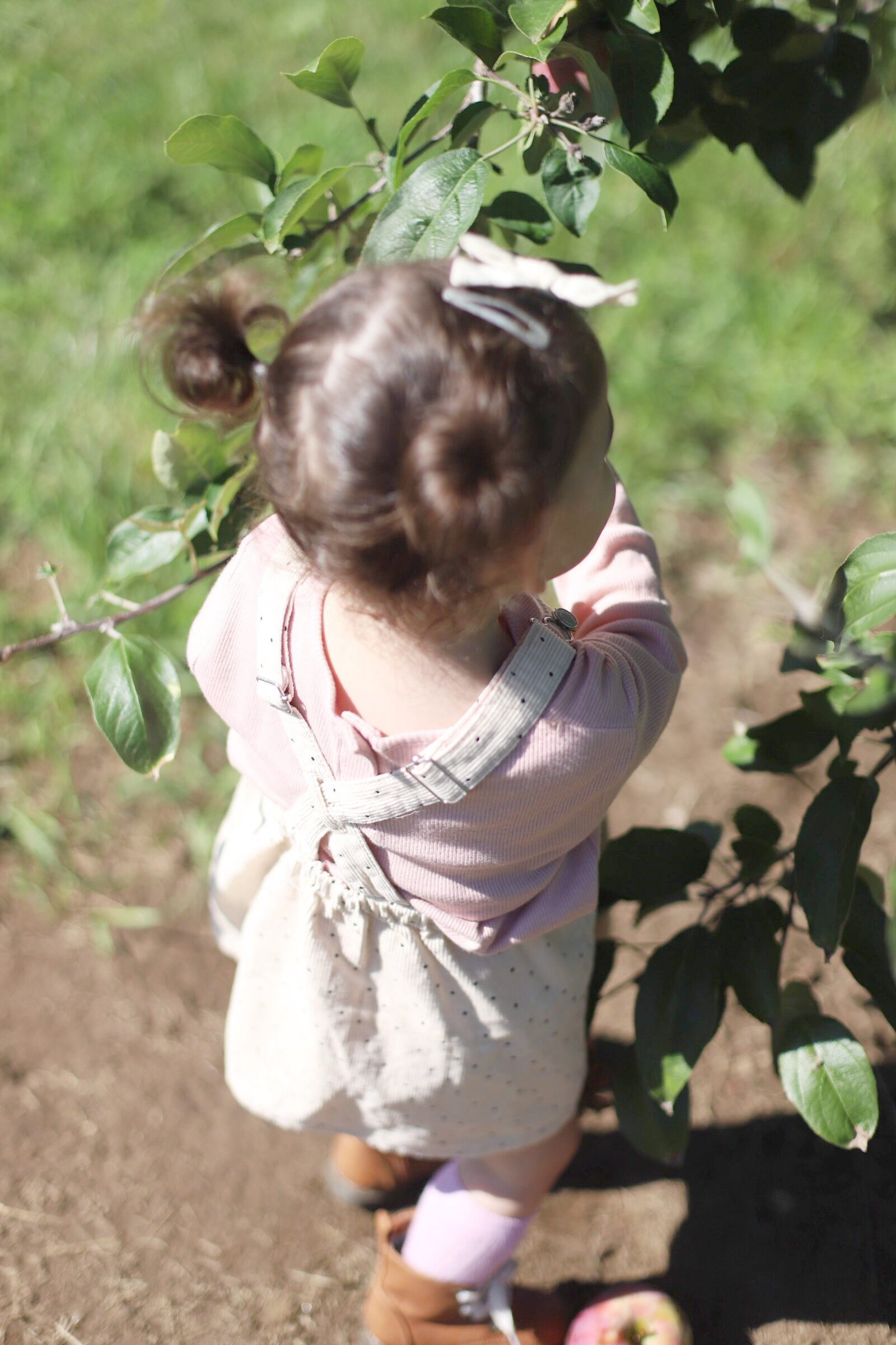A little girl at Brooksby Farm in Peabody, Massachusetts // Fall Bucket List | glitterinc.com | @glitterinc