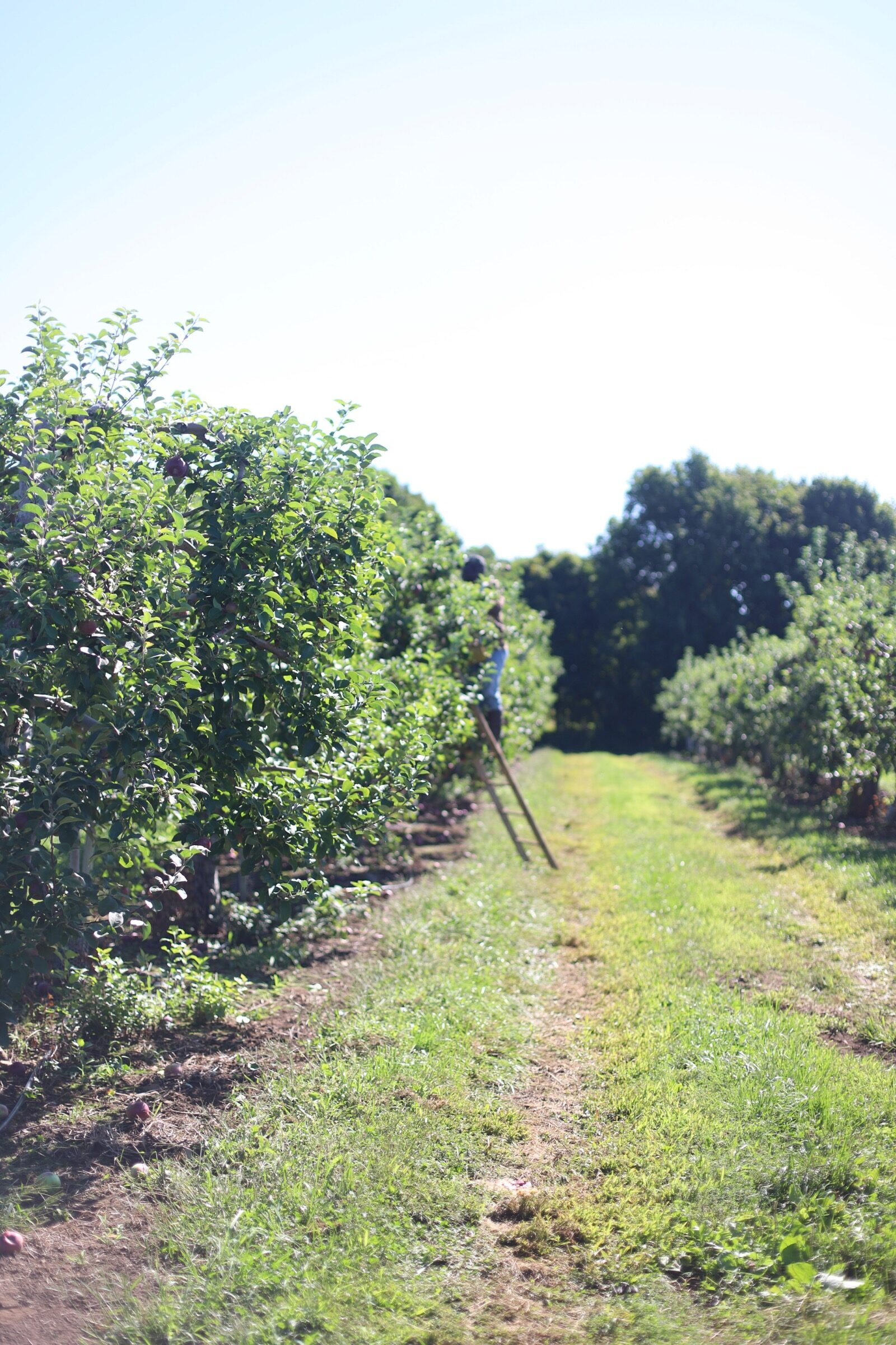 A trip to an apple orchard here in New England, complete with apple picking, barnyard animals, hayrides, and homemade donuts and pie. // Brooksby Farm in Peabody, Massachusetts // Fall Bucket List | glitterinc.com | @glitterinc