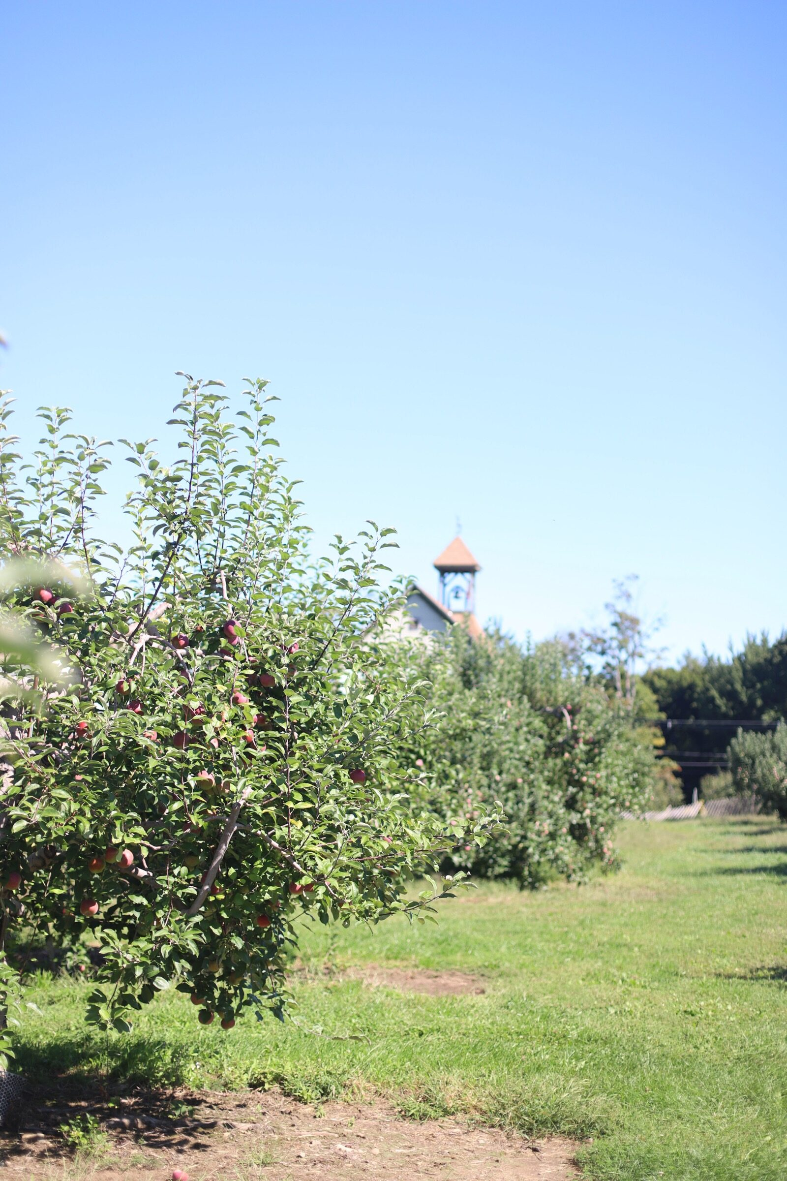 An apple tree at Brooksby Farm in Peabody, Massachusetts // Fall Bucket List | glitterinc.com | @glitterinc
