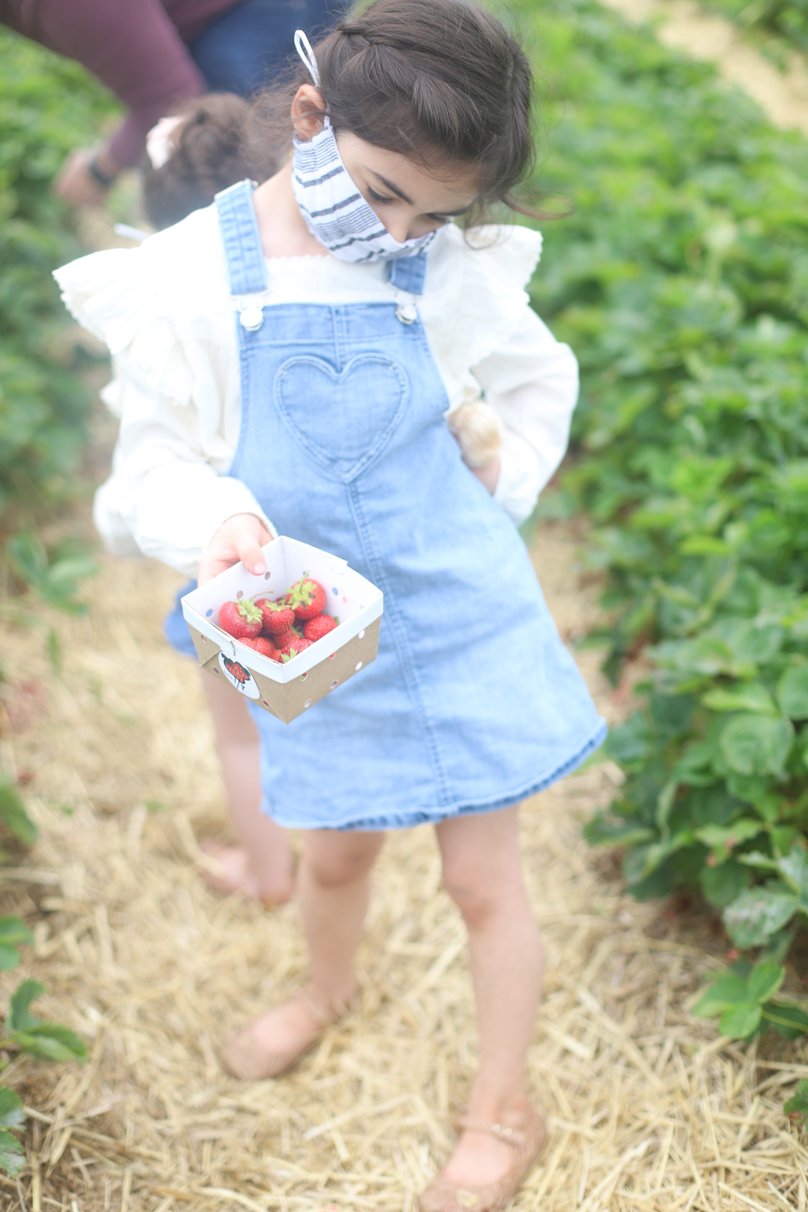 Blueberry and Strawberry Picking at Wards Berry Farm