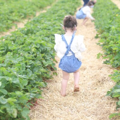 Berry Picking in the Boston Area - Family-Friendly Strawberry and Blueberry Farm in Massachusetts // GLITTERINC.COM