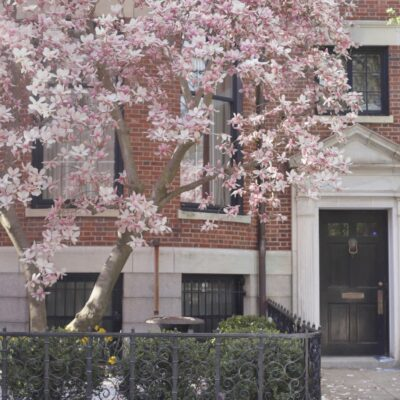 Cherry Blossoms in Boston - Back Bay - GLITTERINC.COM